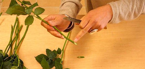 Curso basico florista. Limpieza de las flores